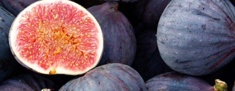 The Fig, Its Scent And Flavor