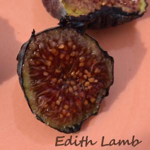 Edith Lamb