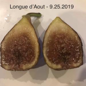 Longue d'Aout