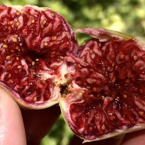 Boysenberry Blush