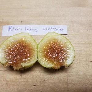 Peter's Honey